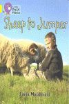 SHEEP TO JUMPER
